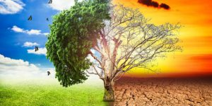 clima materie prime