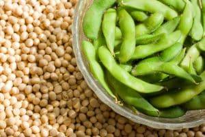 soia trading commodity