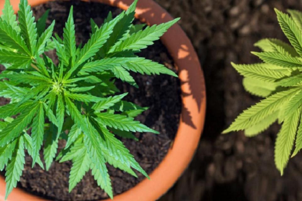 coltivazione cannabis uso personale
